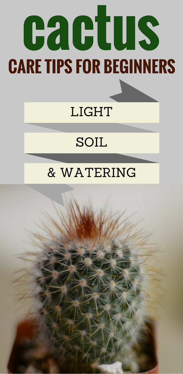 Cactus Care Tips For Beginners