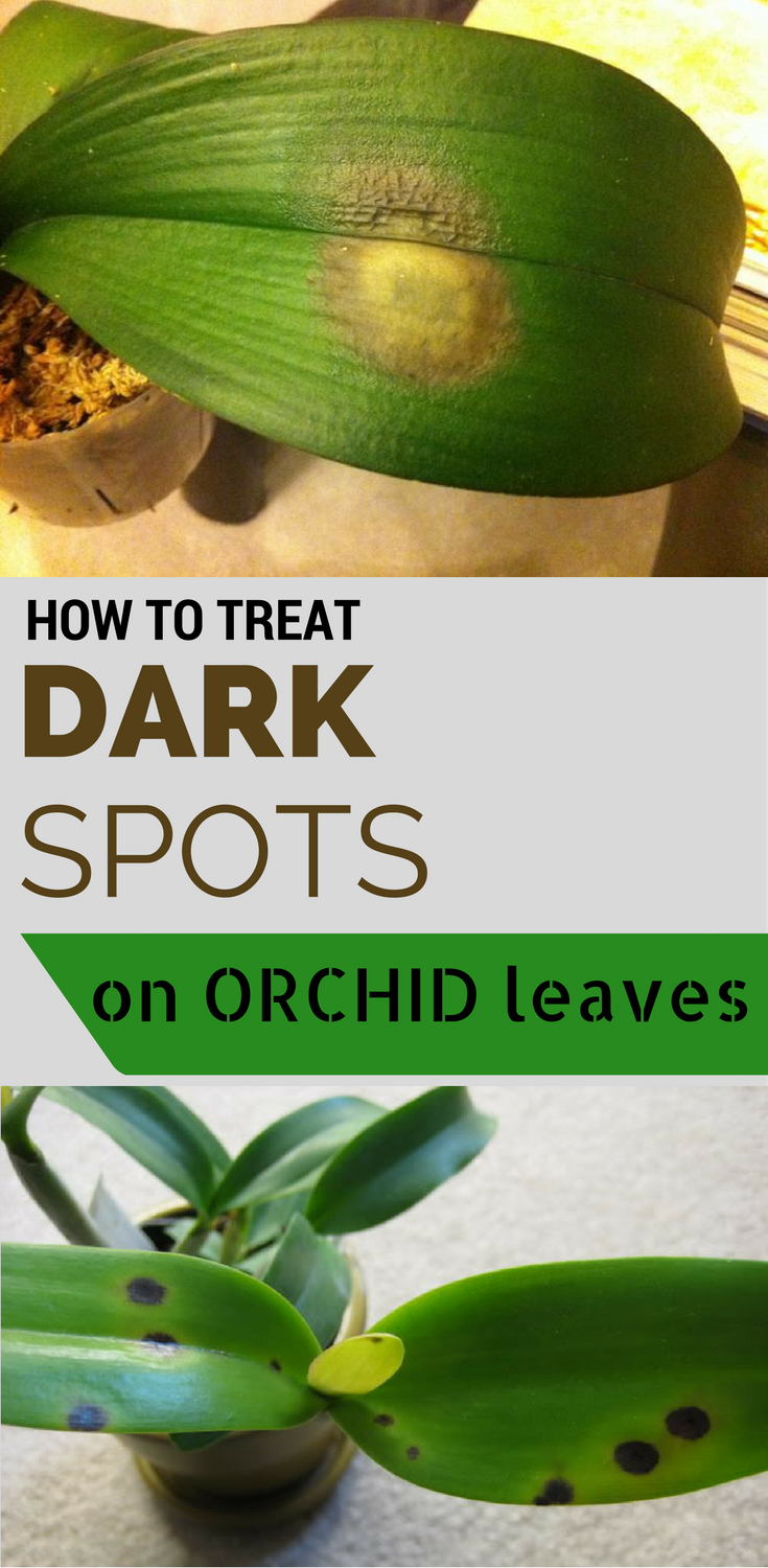 How To Treat Dark Spots On Orchid Leaves Getgardentips Com
