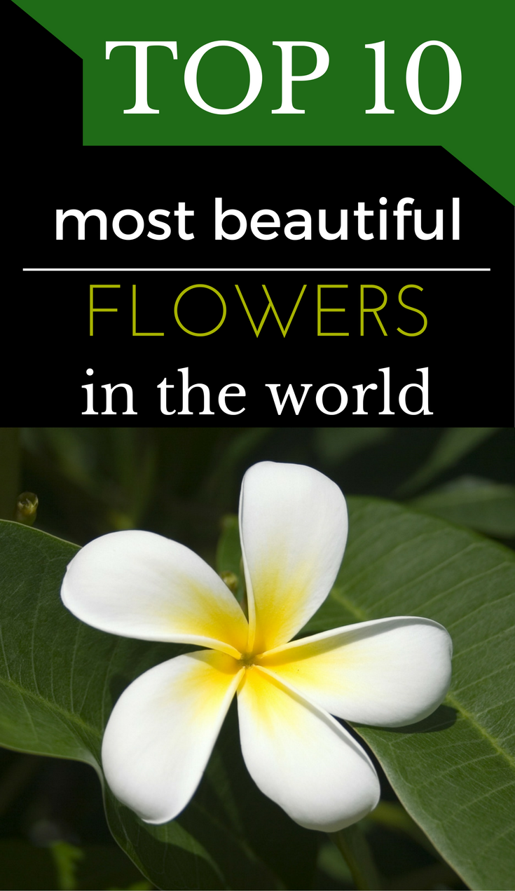 Top 10 Most Beautiful Flowers In The World - GetGardenTips.com
