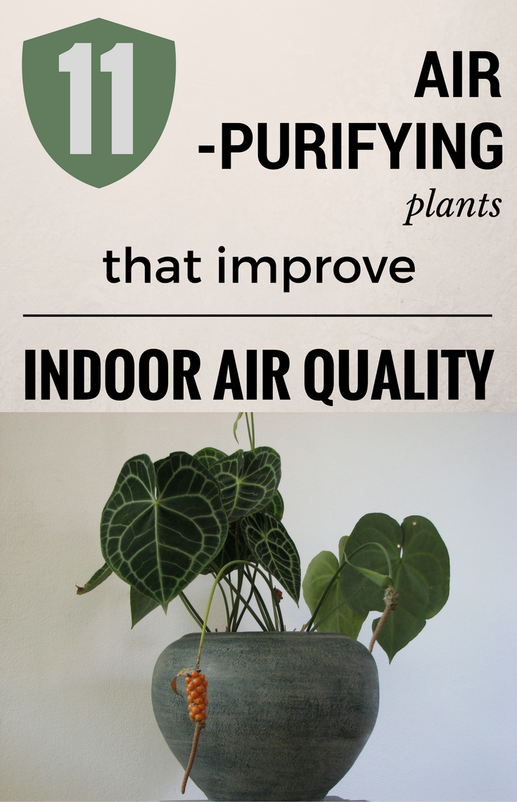 Potted plants indoor air quality hot seller hanging glass for Indoor air quality design