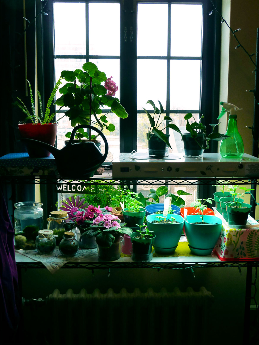 5 Indoor Garden Ideas Perfect For Tiny Spaces