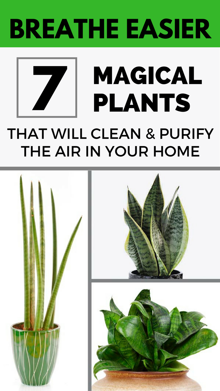 Breathe easier 7 magical plants that will clean and for Best air purifying plants for bedroom