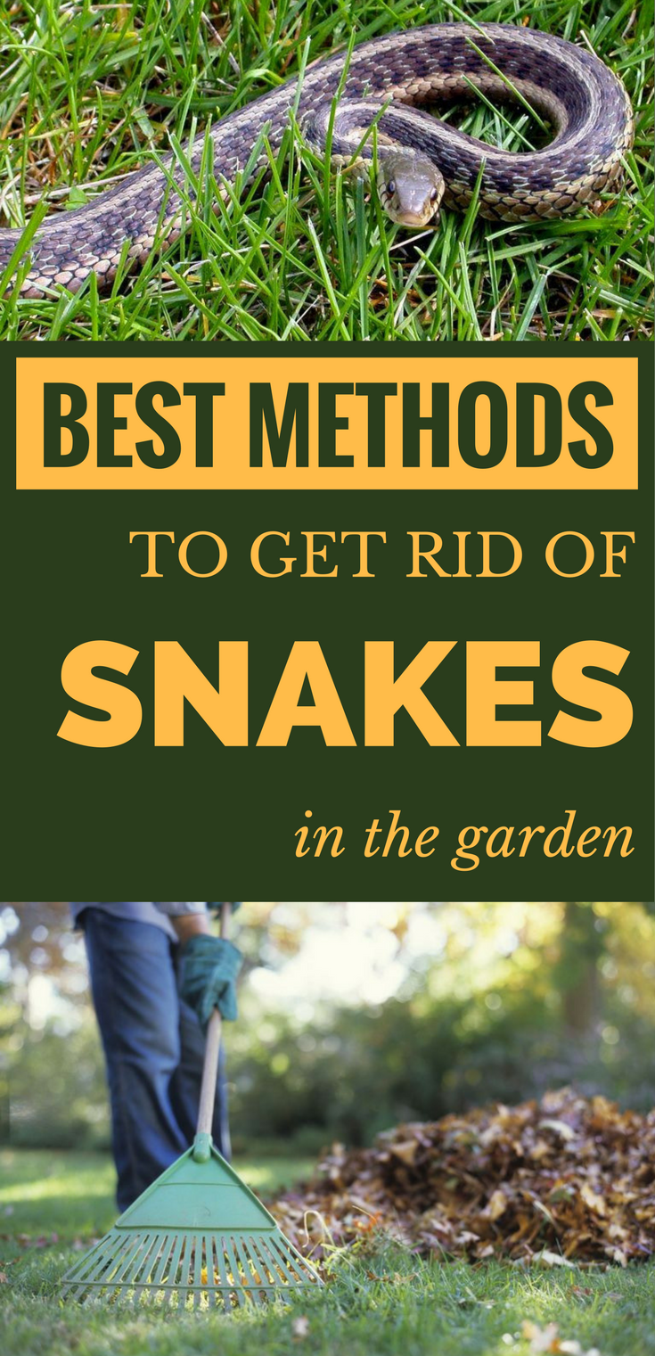 Best Methods To Get Rid Of Snakes In The Garden