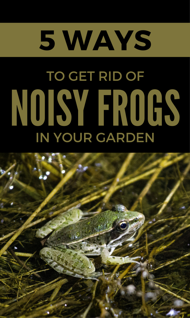 5 Ways To Get Rid Of Noisy Frogs In Your Garden ...