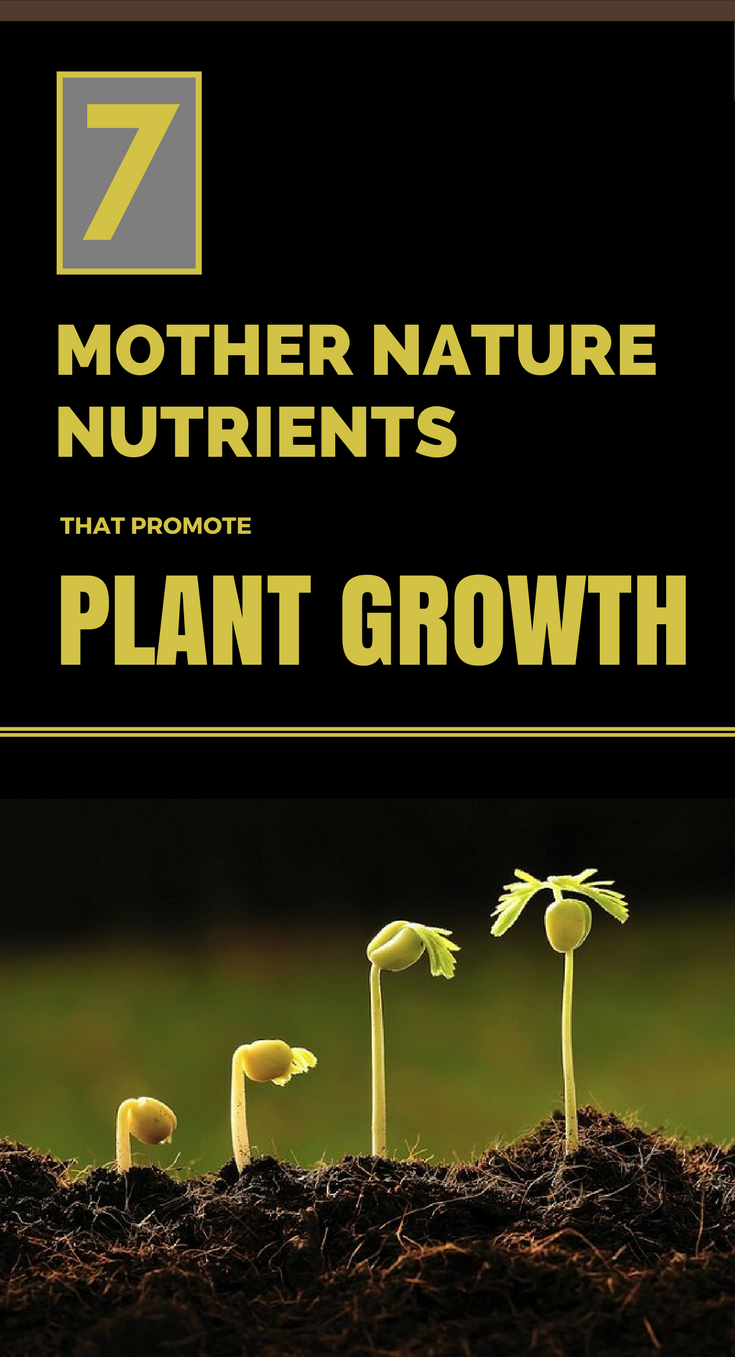 7 mother nature nutrients that promote plant growth - Plants that dont need soil natures wonders ...