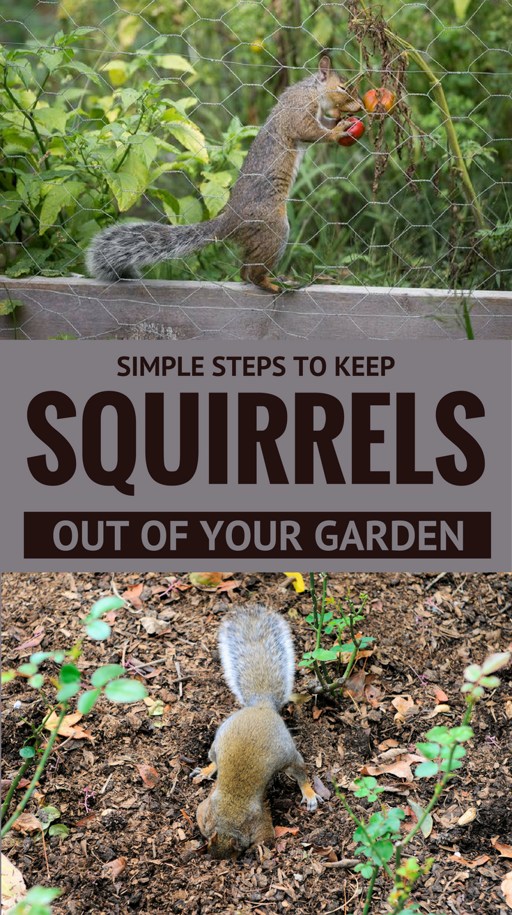 How To Keep Chipmunks Out Of Your Garden 28 Images How To Keep Squirrels Away From Flowers