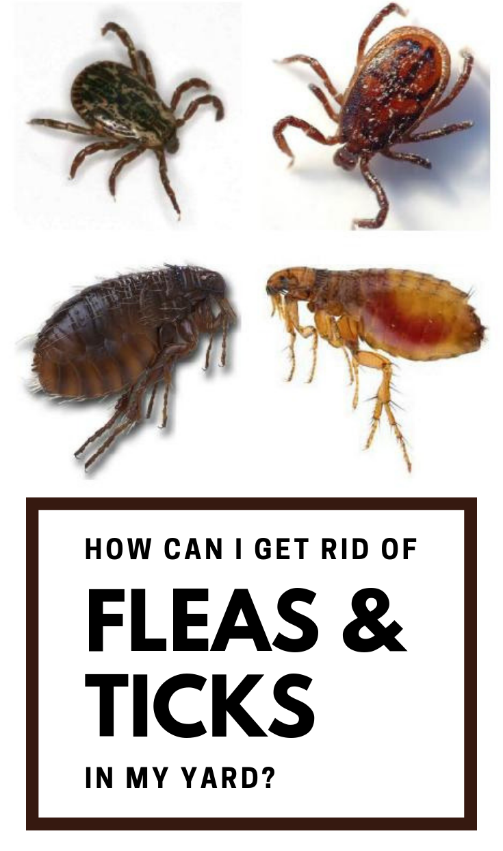How Can I Get Rid Of Fleas And Ticks In My Yard ...
